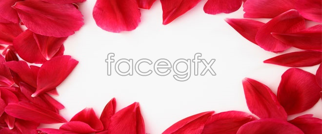 Free  HD picture red petals