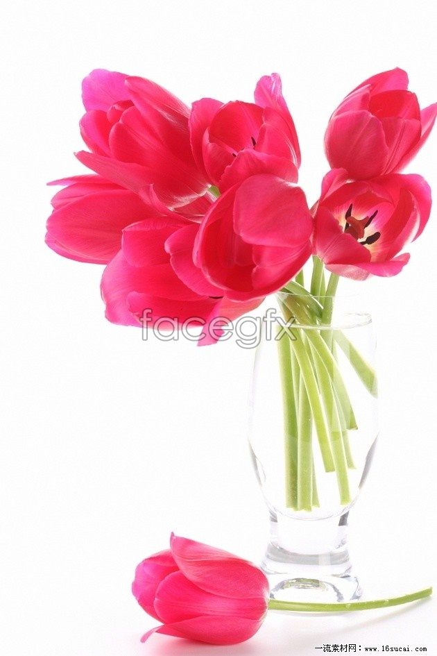 HD bouquets of tulips picture