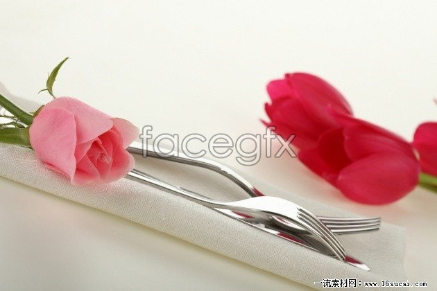 Red Tulip flowers HD picture