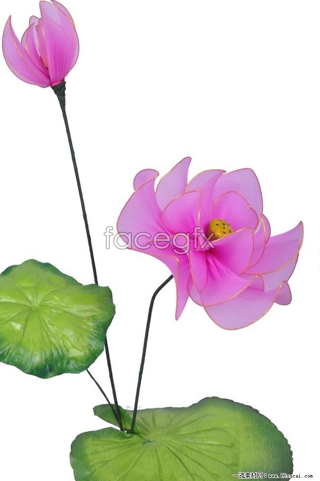 Lotus screen HD