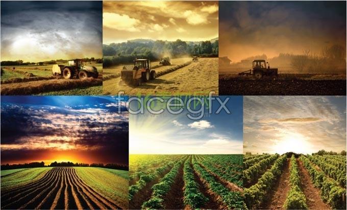 5 farms photo