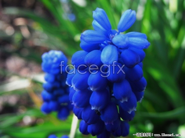 Purple flowers high definition pictures