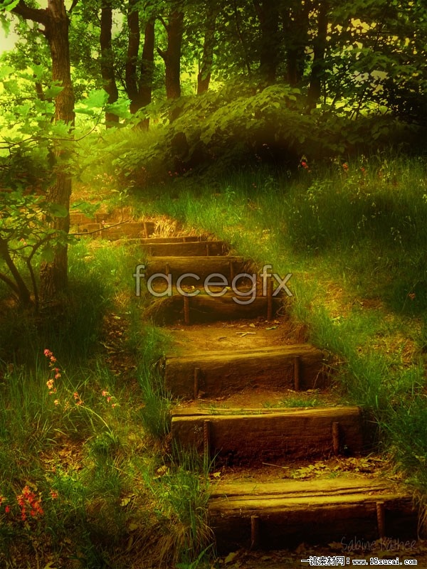 Quiet forest roads high definition pictures