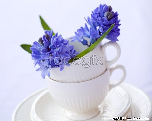 Purple flowers HD picture