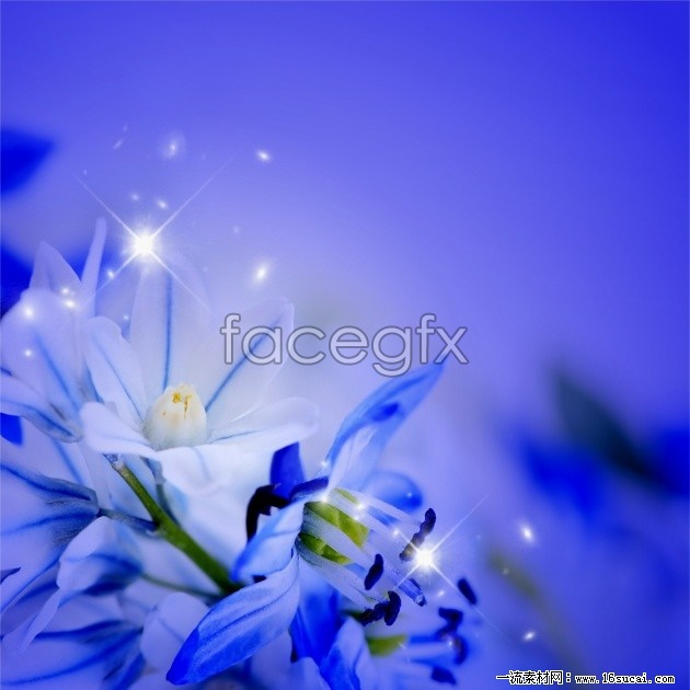Purple flowers photo HD picture