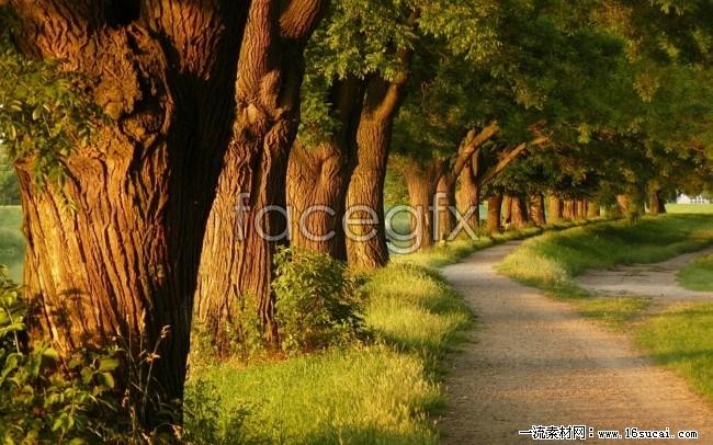 Quiet roadside tree desktop background s