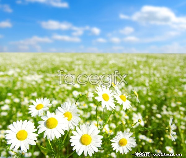 Spring wild flowers open HD pictures