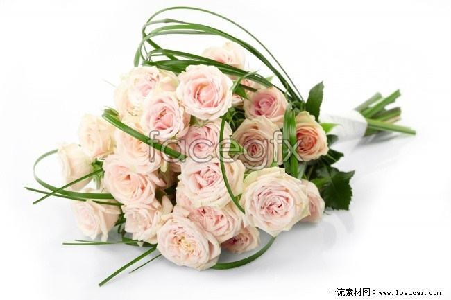 Pink Roses HD picture