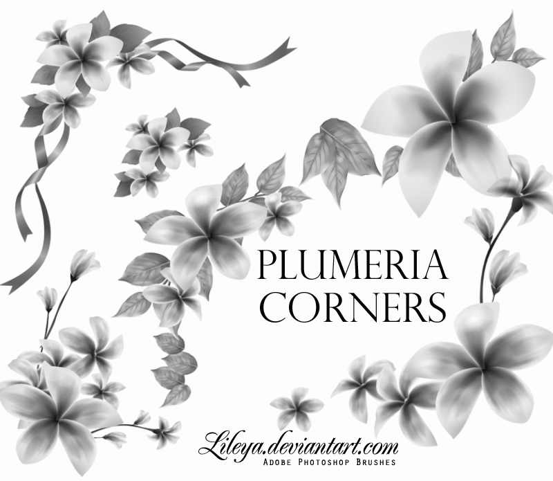 Plumeria Corners Brushes