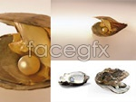 Pearl mussels PSD