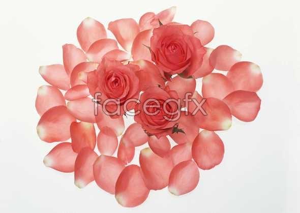 Flowers close-up 1030