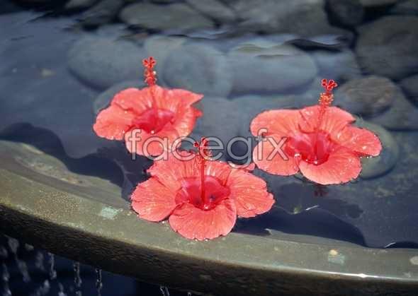 Flowers close-up 1557