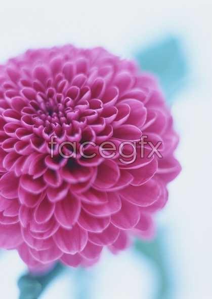 Flowers close-up 1658