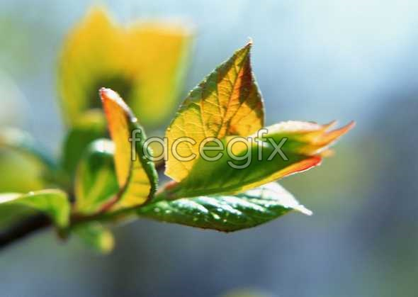 Flowers close-up 340