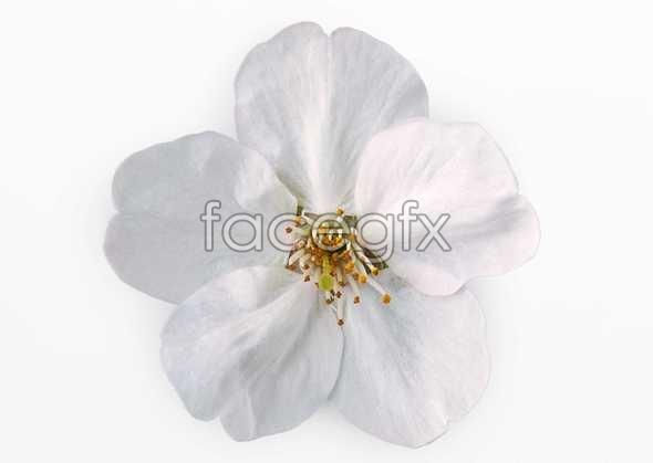 Flowers close-up 454