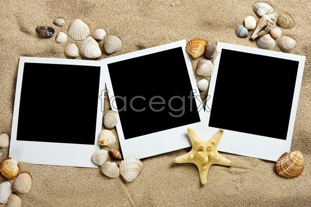 HD Beach seashell picture