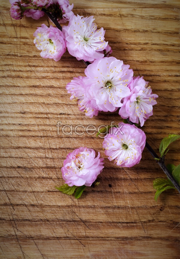 HD pink peach blossom pictures