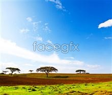 HD African grassland pictures
