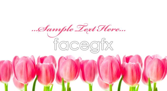 A row of tulips picture
