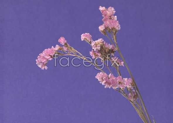 Flowers close-up 1054