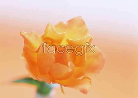 Flowers close-up 1666