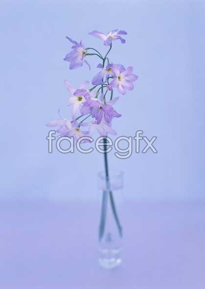 Flowers close-up 1764