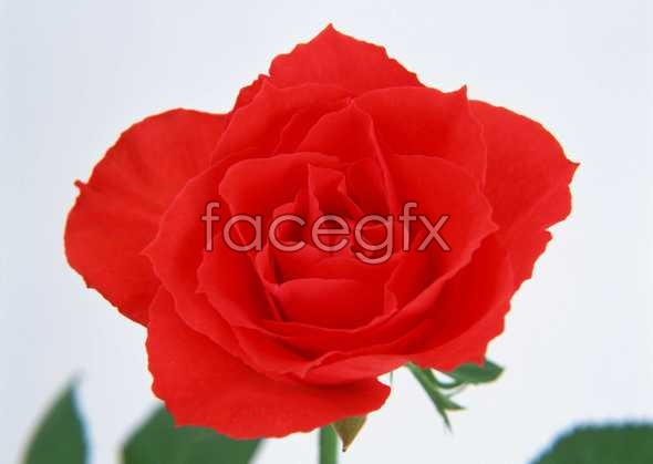 Flowers close-up 37