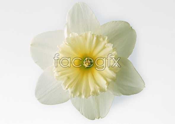 Flowers close-up 462