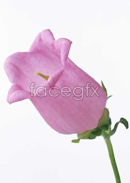 Flowers close-up 569