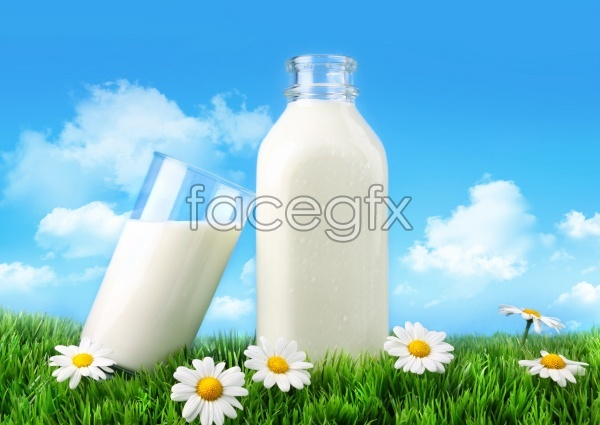 HD milk Daisy pictures