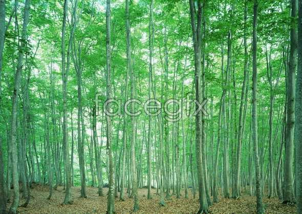 Jungle beauty 101