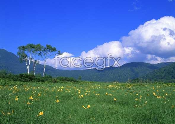 Jungle beauty of 269