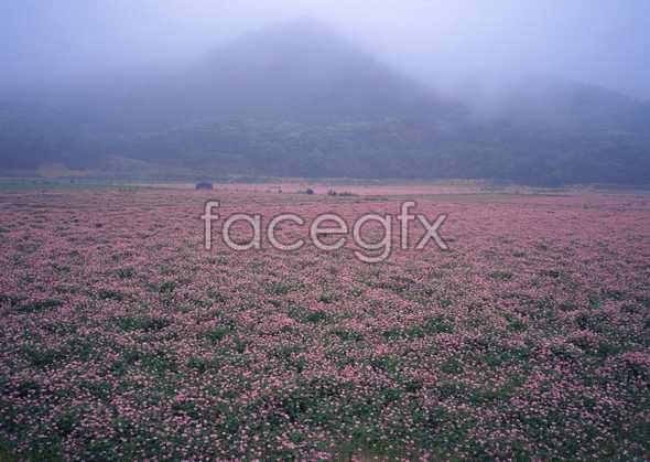 Thousand flower 61