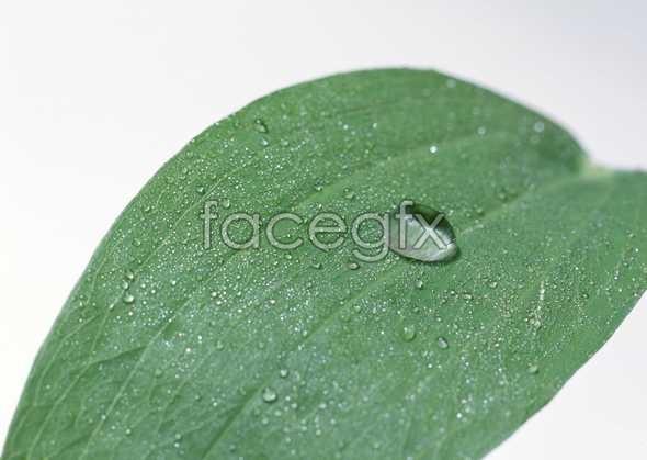 Drop leaf pictures