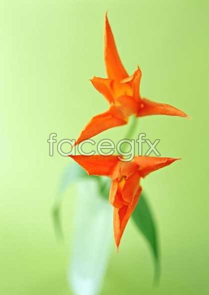 Flowers close-up 1310