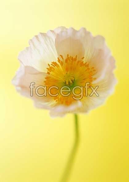 Flowers close-up 1420