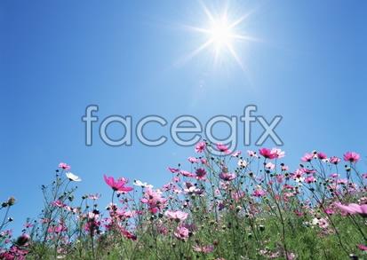 Flowers close-up 2,087