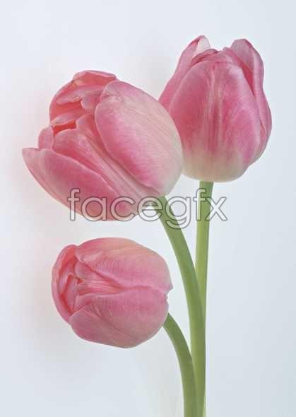 Flowers close-up 992
