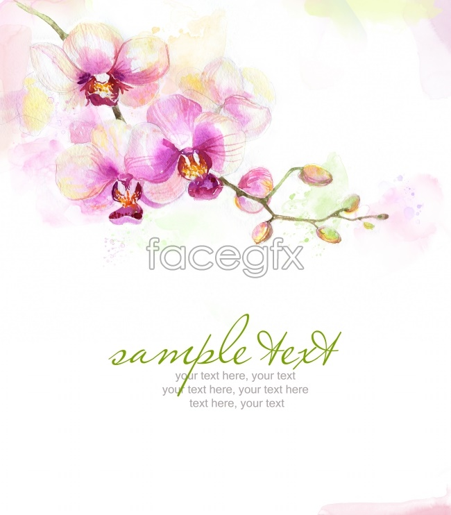 HD hand-painted Orchid pictures