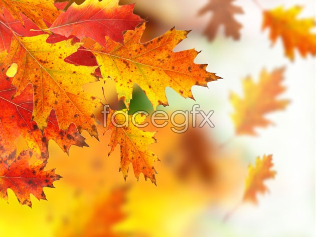 HD Maple Leaf Chinese Restaurant fall pictures
