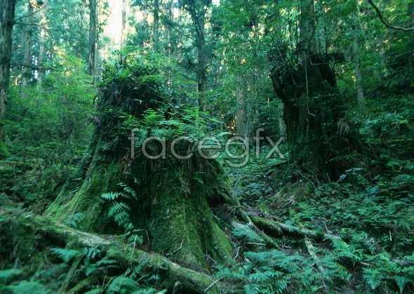 Jungle beauty of 186