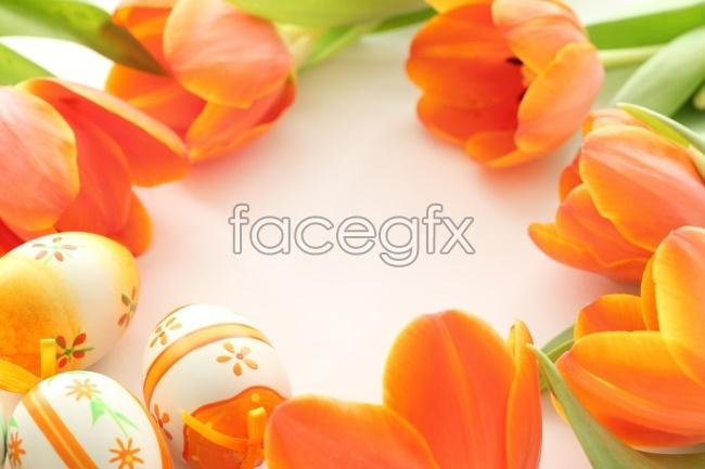Orange Tulip flower pictures
