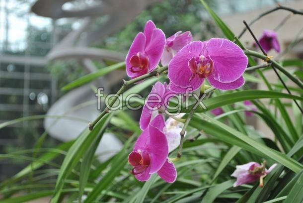 Phalaenopsis bloom pictures