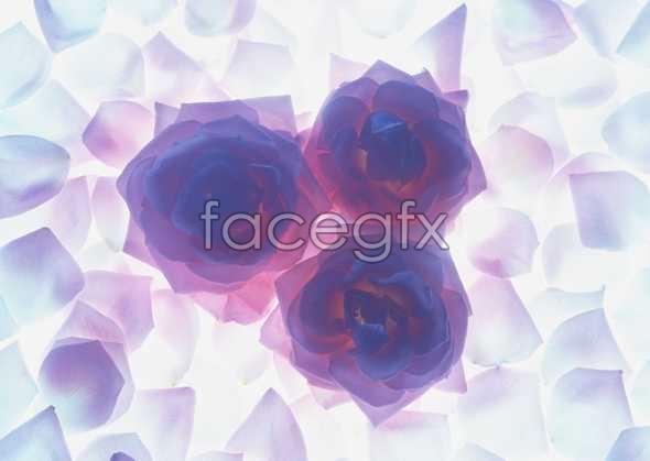 Thousand flower 19