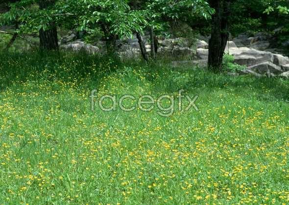 Thousand flower 60