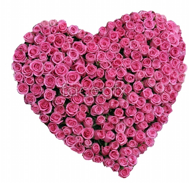 Beautiful roses make up the heart-shaped picture
