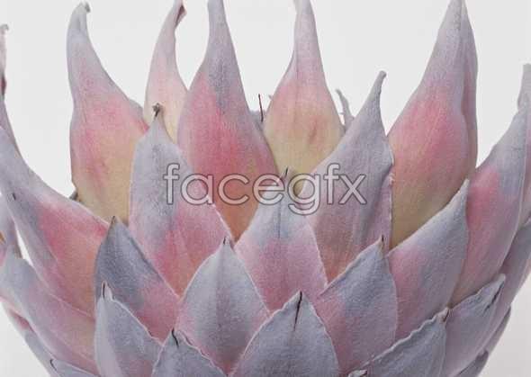 Flowers close-up 962