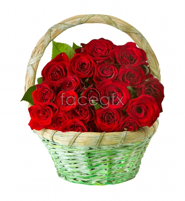 HD a basket of roses pictures