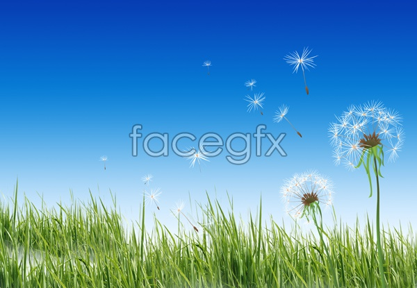 HD flowers and sky image