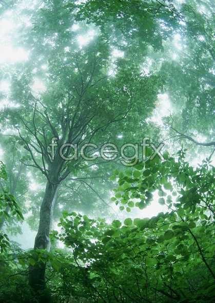 Jungle beauty of 135